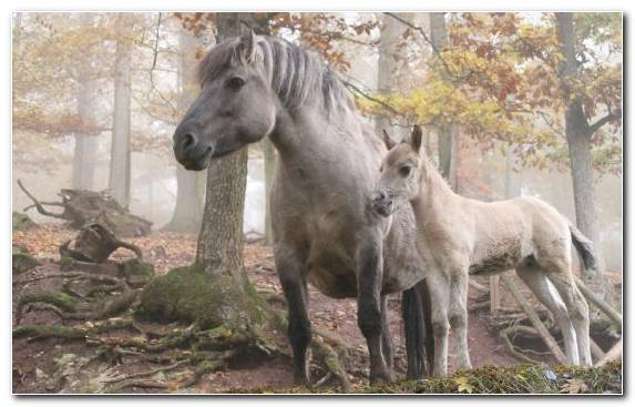 Image Forest Horse New Forest Pony Foal Livestock Pony