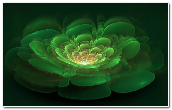 Image Fractal Art Sacred Lotus Green Flora Digital Art