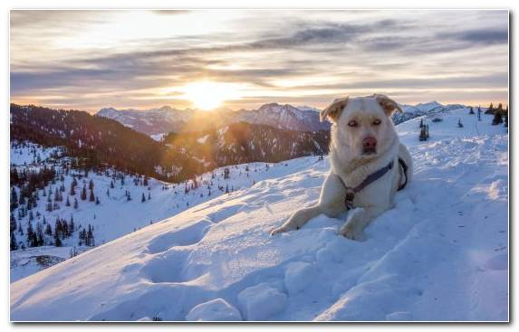 Image Freezing Dog Like Mammal Mountains Sky Dog Breed