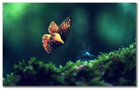 Image Freshwater Aquarium Marine Biology Ecosystem Butterfly Underwater