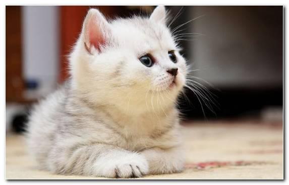 Image Fur Mammal Kitten Felidae Fauna