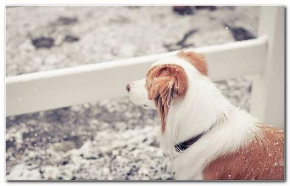 Image Fur Wildcat Animal Dog Breed Ear