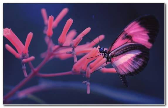 Image Game Video Games Butterfly Brush Footed Butterfly Moths And Butterflies