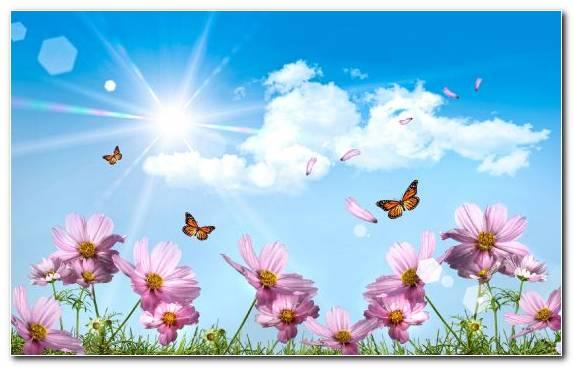 Image Garden Cosmos Daytime Spring Petal Pollinator