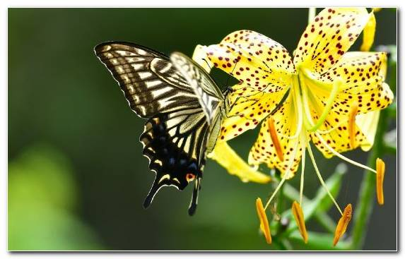 Image Gift Monarch Butterfly Brush Footed Butterfly Pollinator Butterfly