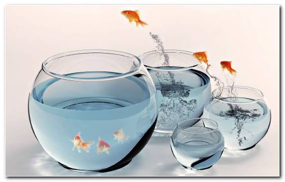 Image Glass Bowl Goldfish Aquarium Diversity Of Fish
