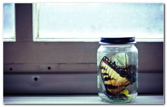 Image Glass Jar Cool Colors Mason Jar Butterfly Bush