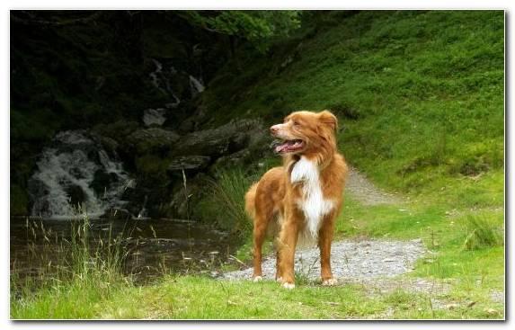Image Golden Retriever Dog Breed Plant Puppy Dog Like Mammal