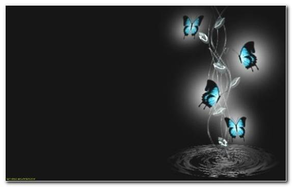 Image Graphic Design Butterfly White Tiger Darkness Tech