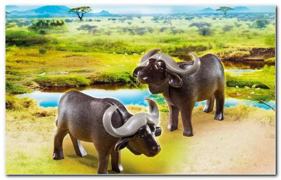 Image Grass Factory Water Buffalo Elephants And Mammoths Wildlife