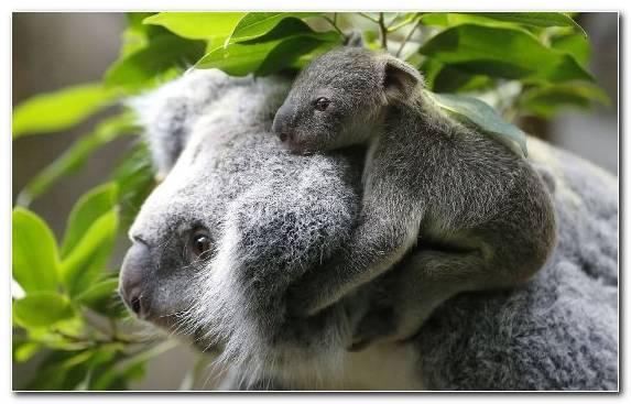 Image Grass Cuteness Koala Animal Wildlife
