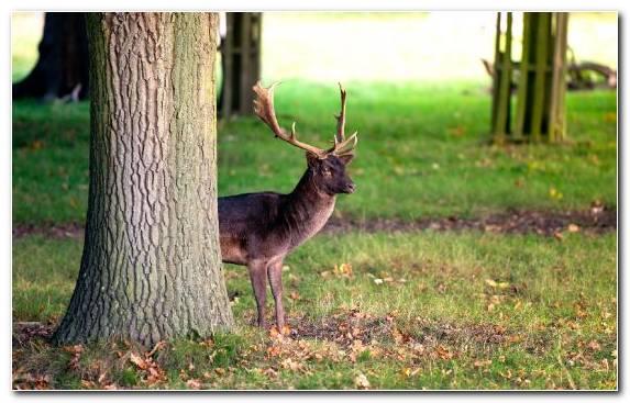 Image Grass Deer Woodland Roe Deer Antler