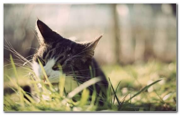 Image grass family snout moustache cat bird
