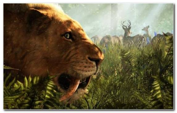 Image Grass Far Cry 3 Far Cry Primal Lion Ubisoft