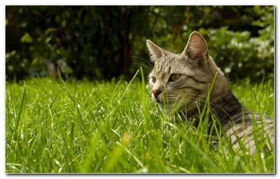 Image Grass Grasses Dogcat Relationship Wildlife Moustache