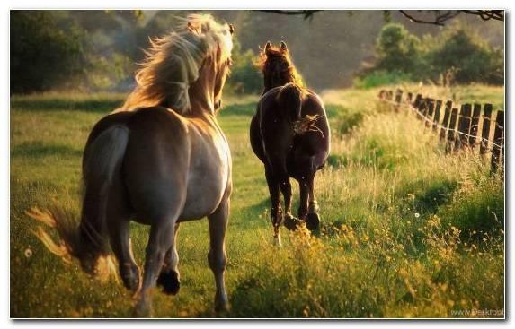 Image Grass Grassland Mane Mustang Ecosystem