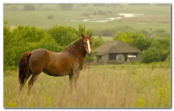 Image Grass Horse Pasture Grassland Ecosystem