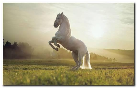 Image Grass Mane Horses Stallion Steppe