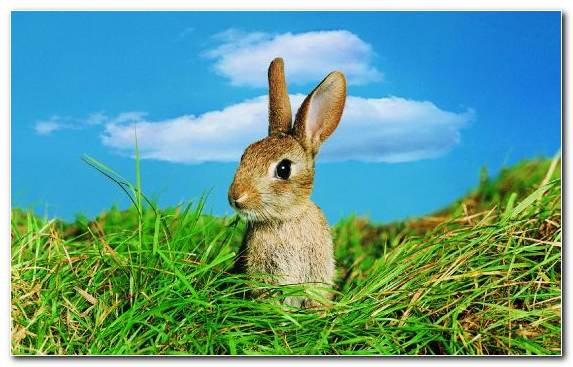 Image Grass Rabbit Grazing White Tailed Jackrabbit Grasses