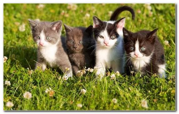 Image grass whiskers moustache persian cat snout