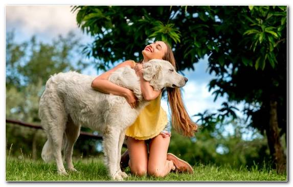 Image Grasses Dog Breed Woman Hug Maremma Sheepdog