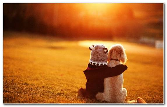 Image Grasses Field Friendship Sunlight Love