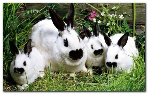 Image Grasses Grass Pet Animal Rabbit