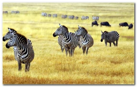 Image Grasses Grassland Wildlife Grass Terrestrial Animal