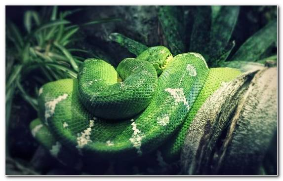 Image Grasses Green Snakes Snake Vegetation
