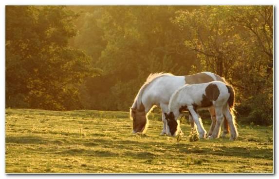 Image Grasses Horses Mane Steppe Grazing