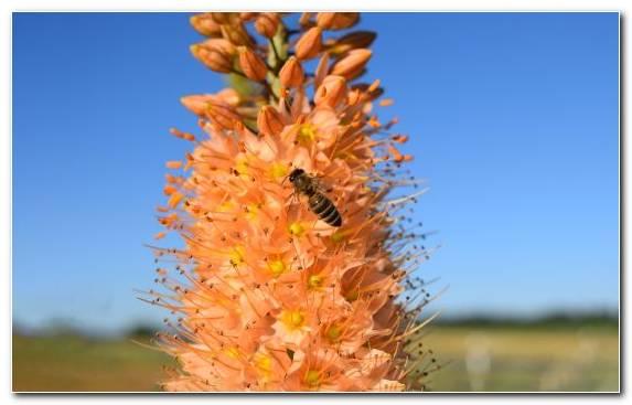 Image Grasses Plant Stem Pollinator Grass Family Plant