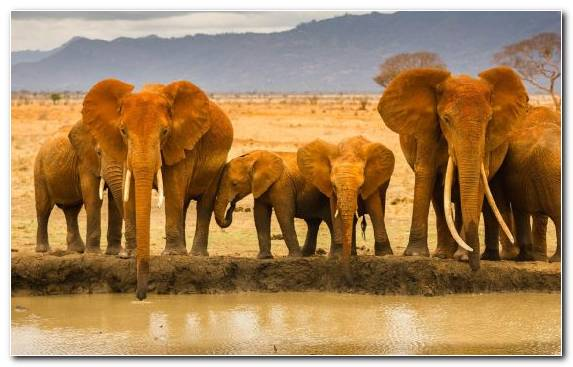 Image Grassland Ecosystem Canvas Africa Herd