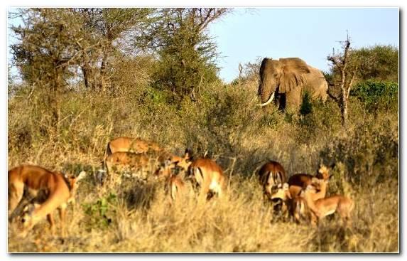 Image Grassland Grazing Wildebeest Tourism Nature Reserve
