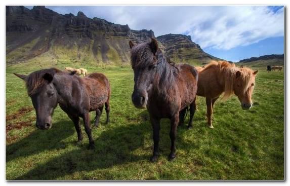 Image Grassland Mane Mare Horse Horses
