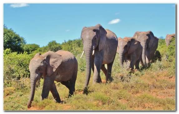 Image Grassland Nature Reserve African Bush Elephant Desert Safari