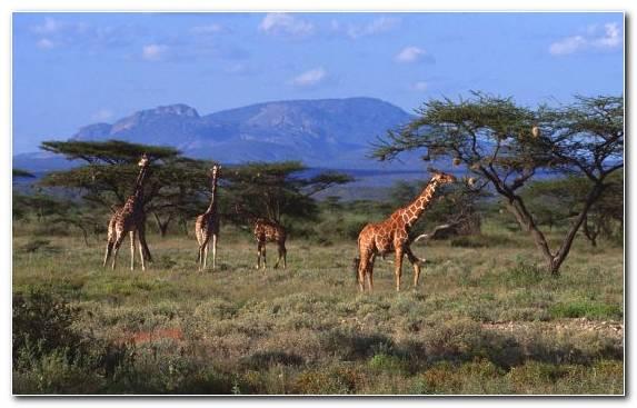 Image Grassland Nature Reserve Wilderness Maasai Mara Desert