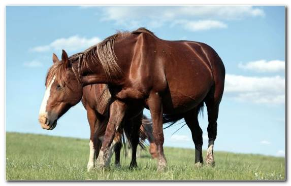 Image Grassland Steppe Ecosystem Stallion Horse