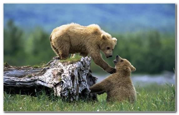 Image Grassland Terrestrial Animal Human Snout Bear