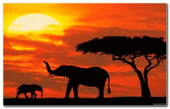 Image Grassland Tourism Savanna Safari Sky