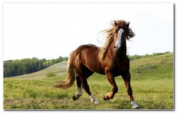 Image Grazing Black Gray Grass Equestrian