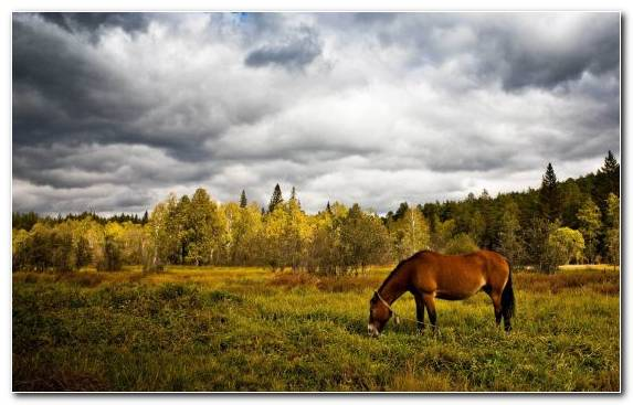 Image Grazing Clouds Wilderness Show Jumping Cloud