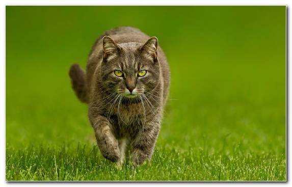 Image Grazing Grassland Grass Felidae Cat