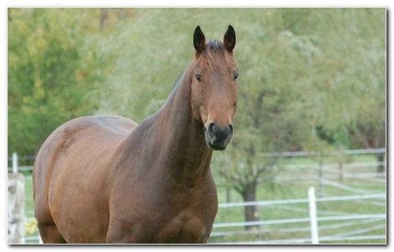 Image Grazing Horses Horse Racing Mare Mane