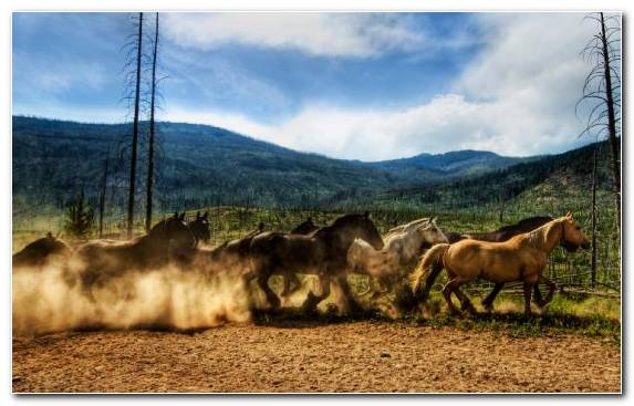 Image Grazing Horses Sky Mustang Horse Mountain