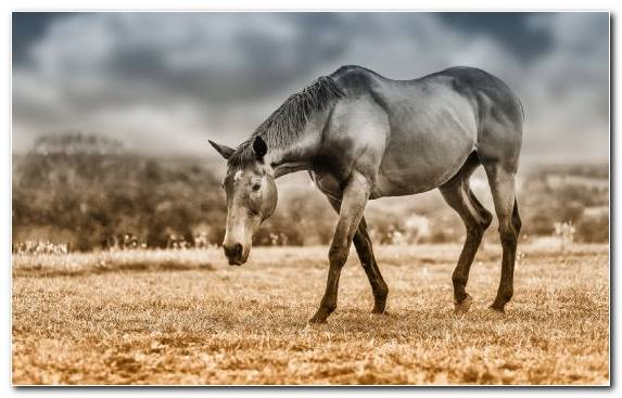 Image Grazing Horses Wildlife Ecosystem Mustang Horse