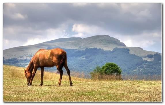 Image Grazing Painting Ecosystem Horse Portrait