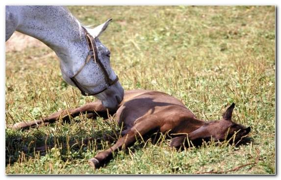 Image Grazing Pasture Mustang Horse Pack Animal