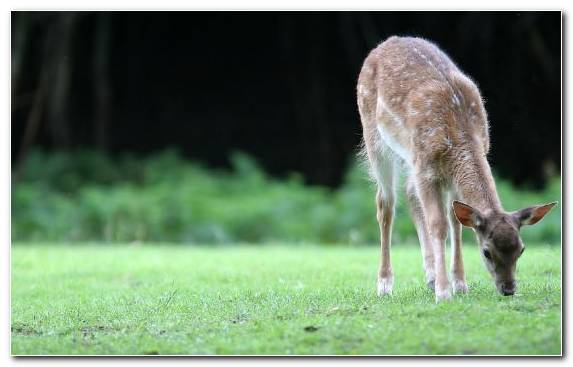 Image Grazing Pasture Terrestrial Animal Animal Grassland