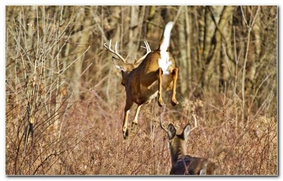 Image Grazing Prairie Grassland Springbok Ecosystem