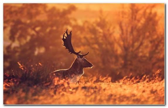 Image Grazing Savanna Wildlife Antelope Prairie
